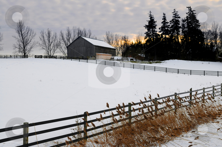Rural winter landscape stock photo, Farm with a barn and horses in winter at sunset by Elena Elisseeva