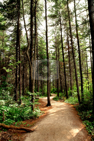 Forest trail stock photo, Trail in a pine forest by Elena Elisseeva