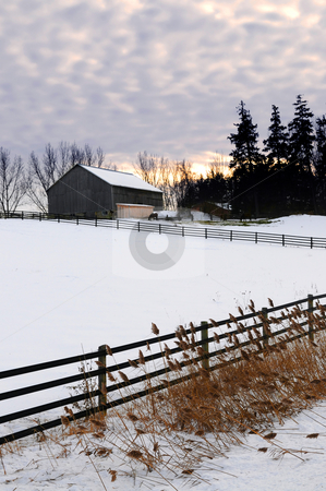 Snow covered horse farm stock photo, Farm with a barn and horses in winter at sunset by Elena Elisseeva