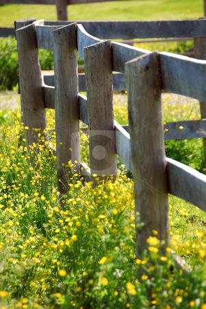 Summer meadow stock photo, Yellow buttercups growing near farm fence in a green meadow by Elena Elisseeva