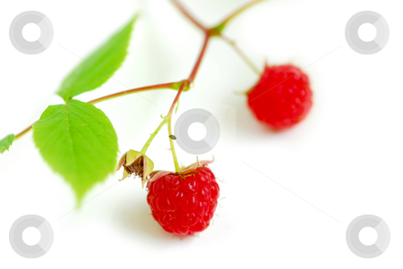 Raspberry branch white stock photo, Macro of raspberry branch on white background by Elena Elisseeva