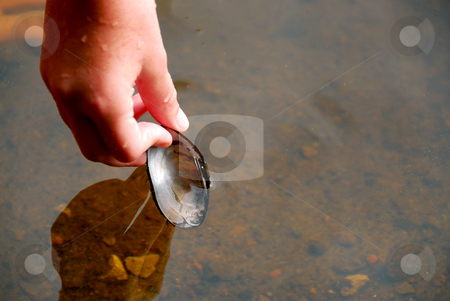 Hand with shell stock photo, Child's hand taking a shell out of water by Elena Elisseeva