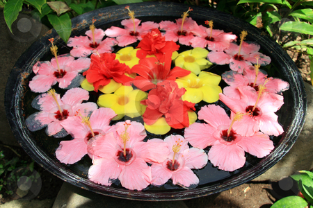 Floral arrangment stock photo, Gumamela flower arrangement on a basin of water by Jonas Marcos San Luis