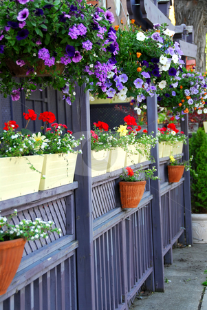 Restaurant patio stock photo, Restaurant patio fence with colorful flowers by Elena Elisseeva