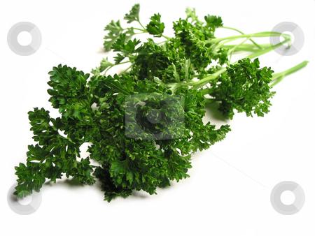 Fresh parsley on white background stock photo, Fresh bright green parsley closeup isolated on white background by Elena Elisseeva