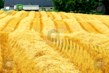 Harvest farm field stock photo, Farm field with yellow harvested grain and farmhouse by Elena Elisseeva