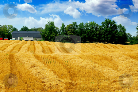 Harvest grain field stock photo, Farm field with yellow harvested grain and farmhouse by Elena Elisseeva