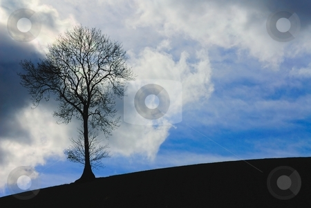 Silhouette of tree  stock photo, Silhouette of tree against blue sky and clouds by Stefan Edwards
