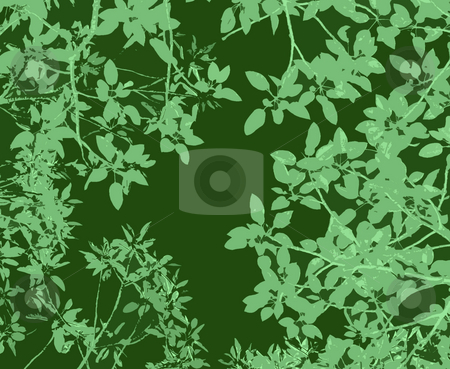 Gum leaves backdrop stock photo, Natural green backdrop created from a tree photo by Stephen Gibson