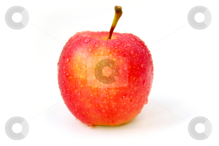 Red apple stock photo, One red apple with water droplets on white background by Elena Elisseeva