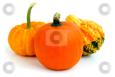 Mini pumpkin stock photo, Three mini pumpkins on white background by Elena Elisseeva