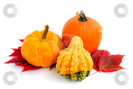 Mini pumpkins stock photo, Mini pumkins with autumn leaves on white background by Elena Elisseeva