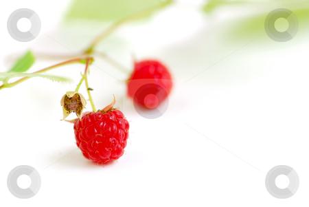 Raspberry branch white stock photo, Macro of raspberry branch on white background by Elena Elisseeva