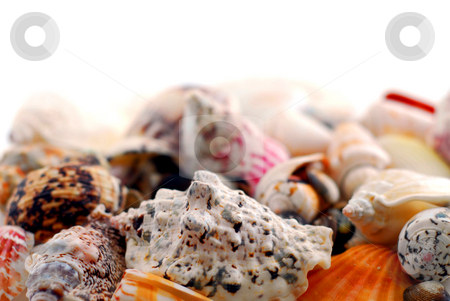 Sea shells stock photo, Sea shells in perspective by Elena Elisseeva