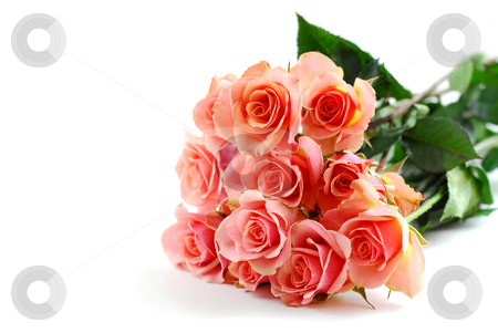 Pink rose bouquet on white stock photo, Bouquet of pink roses on white background by Elena Elisseeva
