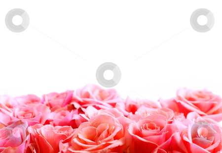 Flower border stock photo, Pink rose border with white space for copy by Elena Elisseeva