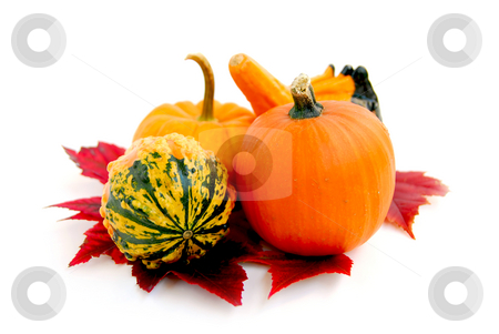 Mini pumpkins stock photo, Mini pumkins with autumn leaves on white background by Elena Elisseeva