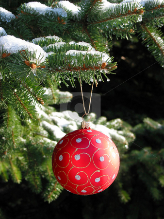 Red Christmas ball on fir tree stock photo, Red Christmas ball on snow covered fir tree by Elena Elisseeva