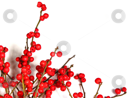 Red christmas berries on white 1 stock photo, Berry tree christmas decoration isolated on white background by Elena Elisseeva