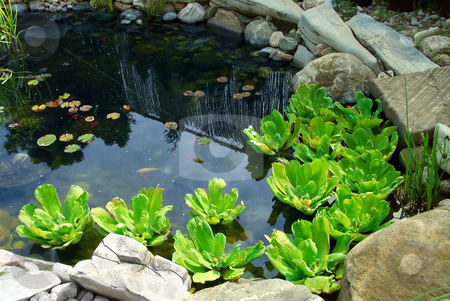 Pond stock photo, Natural stone pond as landscaping design element by Elena Elisseeva