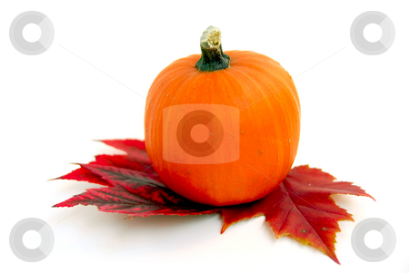 Mini pumpkin stock photo, Mini pumpkin with autumn leaves on white background by Elena Elisseeva