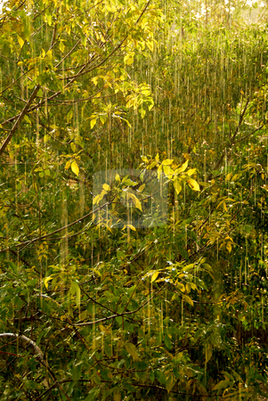 Rain and sun stock photo, Rain and sunshine - falling raindrops sparkling by Elena Elisseeva