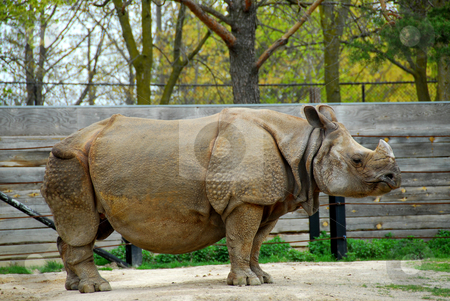 Rhinoceros stock photo, African white rhinoceros by Elena Elisseeva