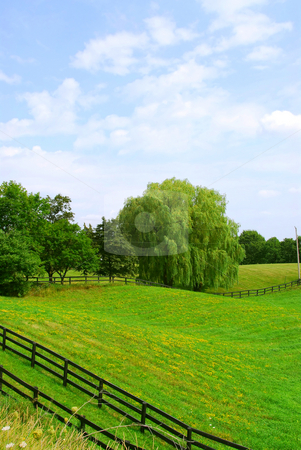 Rural landscape stock photo, Rural landscape with lush green fields and trees by Elena Elisseeva