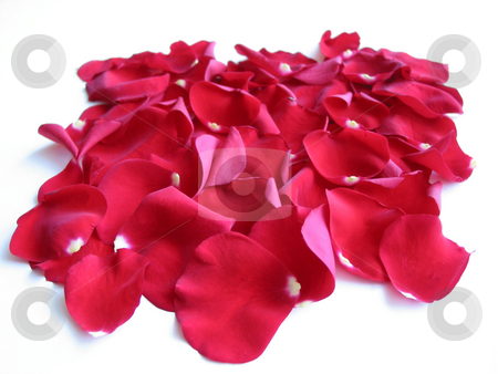 Red rose petals stock photo, Red rose petals on white background by Elena Elisseeva