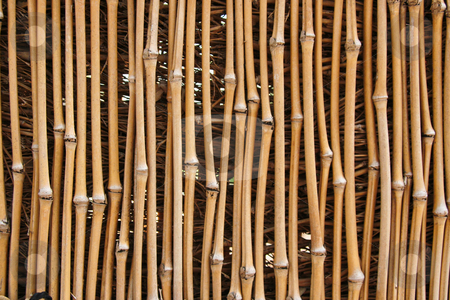 Bamboo Texture stock photo, Photo of a bamboo fence that is for textures or other uses. by Kevin Tietz