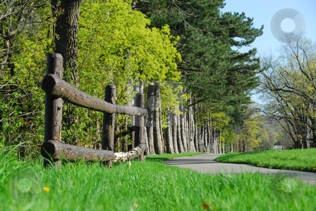 Spring in a park stock photo, Spring park with cycling path by Elena Elisseeva