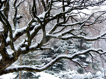 Snowfall and tree stock photo, Old tree covered with snow on background of winter park, big fluffly snowflakes falling are seen at full size by Elena Elisseeva