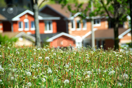 Residential street stock photo, Houses on residential street, spring time by Elena Elisseeva