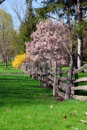 Spring landscape stock photo, Spring landscape with blooming trees and old wooden fence by Elena Elisseeva