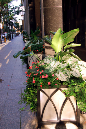 Street stock photo, City street in the summer decorated with potted flowers by Elena Elisseeva