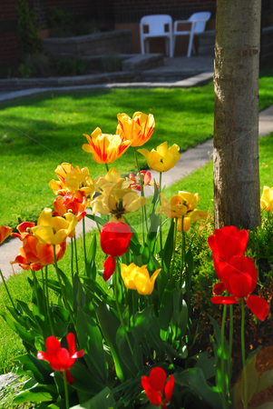 Tulips at a house stock photo, Bright colorful tulips on front of a residential house by Elena Elisseeva