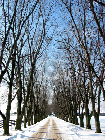 Winter tree lined lane 1 stock photo, Winter tree lined lane on a snow covered farm on a sunny day by Elena Elisseeva