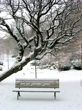 Winter bench stock photo, Winter bench in a park covered with snow, under a tree by Elena Elisseeva