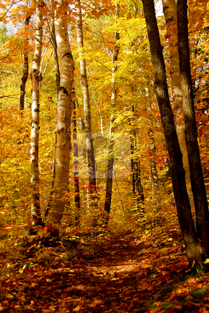 Fall forest stock photo, Fall forest background with hiking trail by Elena Elisseeva