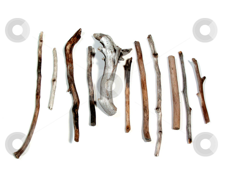 Sea twigs stock photo, Twigs polished by the sea on white background by Elena Elisseeva
