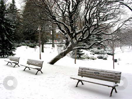 Winter benches stock photo, Winter benches in a park under a tree  covered with snow. Big snowflakes falling are seen at full size. by Elena Elisseeva