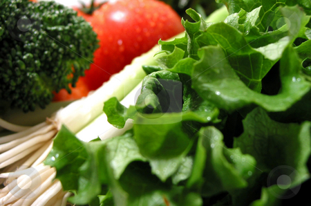 Fresh wet vegetables stock photo, Fresh vegetables with water droplets, shallow dof, focus on lettuce by Elena Elisseeva