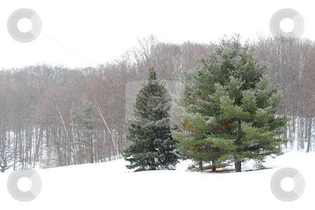 Winter landscape stock photo, Winter landscape during snowfall by Elena Elisseeva