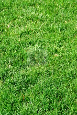 Grass background stock photo, Background of fresh green grass by Elena Elisseeva