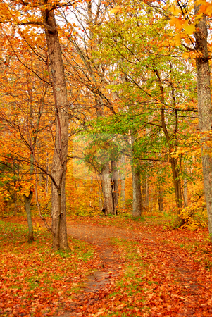 Fall forest road stock photo, Road in a fall forest by Elena Elisseeva