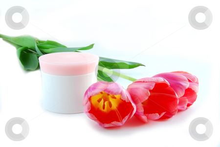Tulips and cream stock photo, Pink tulips and cream on white background by Elena Elisseeva