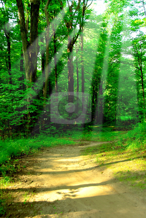 Sunny forest stock photo, Green quiet forest on hot summer day wih sun beams by Elena Elisseeva
