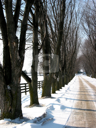 Winter tree lined lane 3 stock photo, Winter tree lined lane on a snow covered farm on a sunny day by Elena Elisseeva