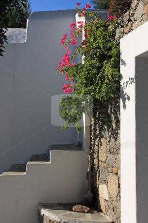 Greek Island Detail stock photo, The doorstep of a typical greek island house in Mykonos island, with nice Bougainvillea flowers by Georgios Alexandris