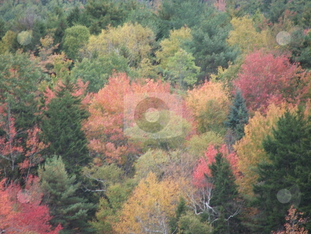 Maine fall colors stock photo, Fall colors dapple a Maine hillside in October. by Dennis Thomsen